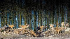 WolfPack01.jpg